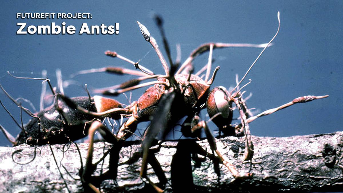 Zombie Ants! - Symbiotic Relationships