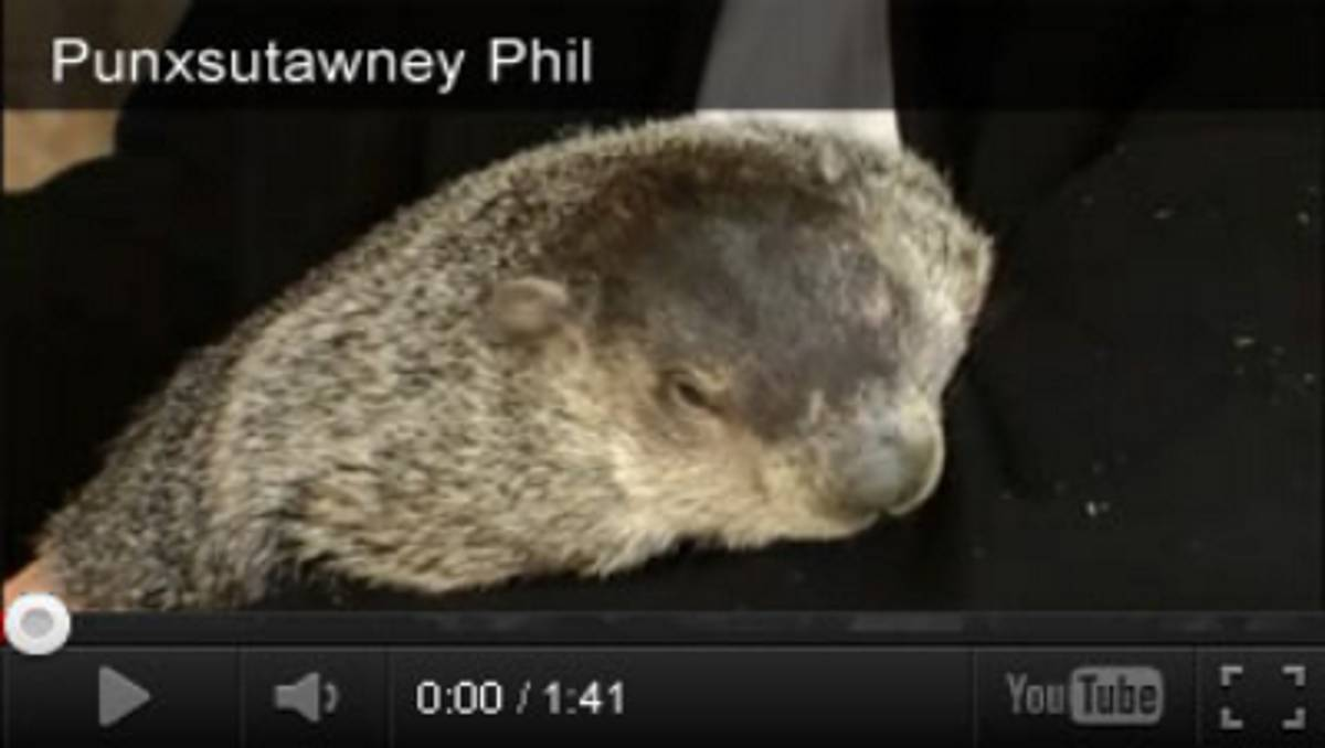 Groundhog Day Videos and Activities