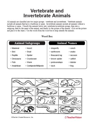 graphic about Invertebrates Worksheets Free Printable titled Vertebrate and Invertebrate Pets - TeacherVision