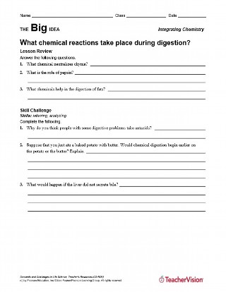 Chemical Reactions in the Human Body During Digestion