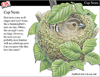 Building Nests Cover Image