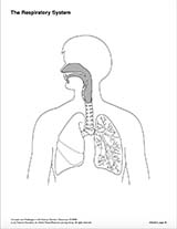 The Respiratory System (Blank) Printable