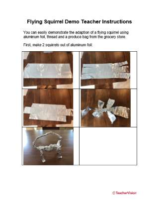 Animal Adaptations Flying Squirrel Activity