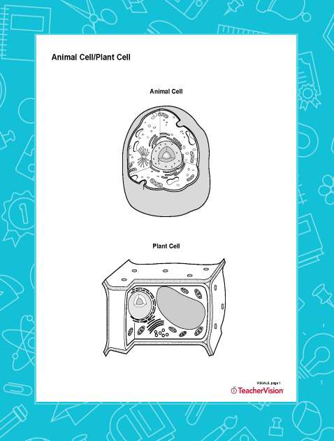 Blank Printable Diagram of Animal and Plant Cell Structure