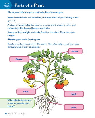 TinkerActive Science Activity Lesson: Parts of a Plant (Grade 1)