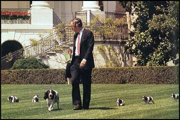 PresidentialPets,GeorgeH.W.Bush,dog,Millie