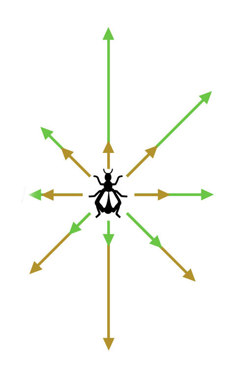 Insect Compass