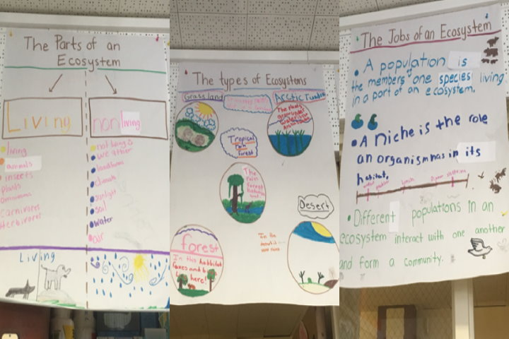 student-created anchor charts example