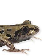 Instant Expert: Amphibians