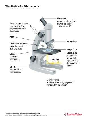 Parts of a Microscope Labeled for Lab Use