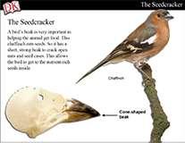 Bird Beaks Cover Image