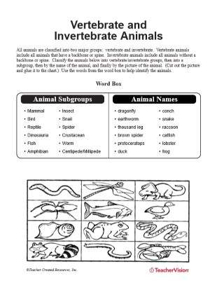 Vertebrate and Invertebrate Animals Matching Activity