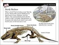 Fossils Mini-Lesson Cover Image