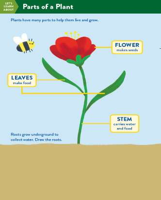 TinkerActive Science Activity Lesson: Parts of a Plant (Grade K)
