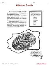 Fossils Identification Worksheet
